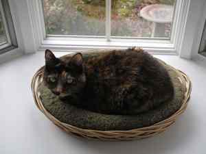 Lulu, a rescue cat from L.A.