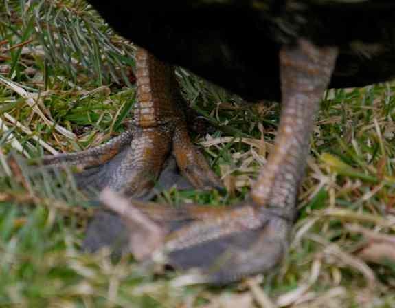Pigeon-toed?