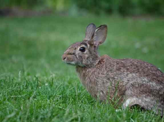 BunnyAlert