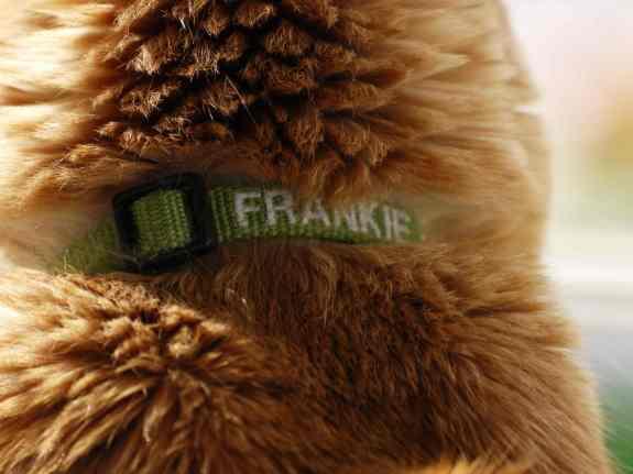 Frankie2
