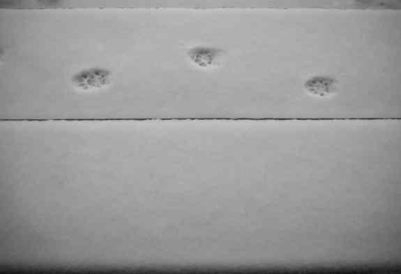 CatSteps