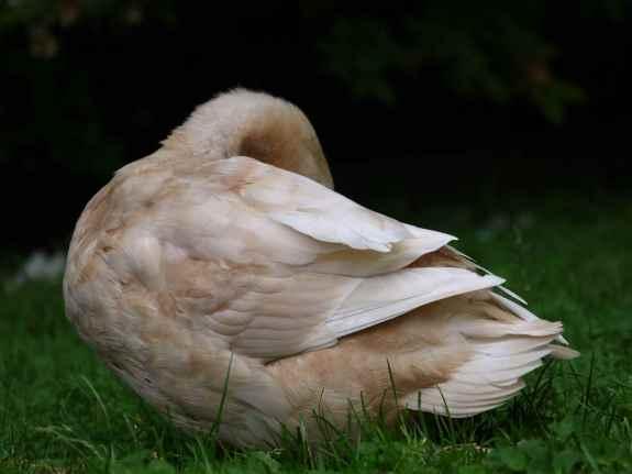 DuckNH
