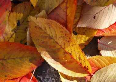 Leafy2