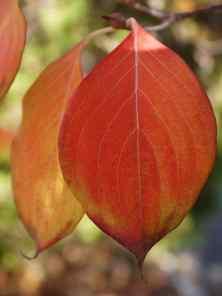 Leafy5