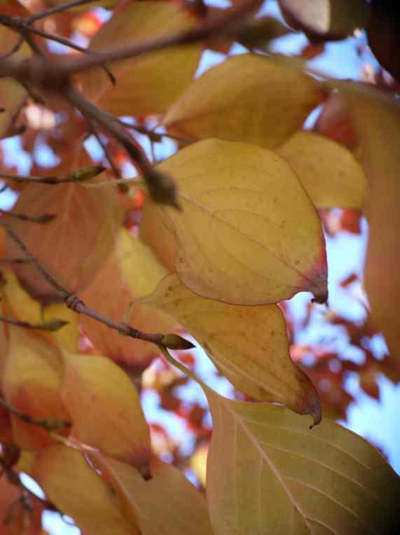 Leafy6