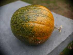 MyLilPumpkin