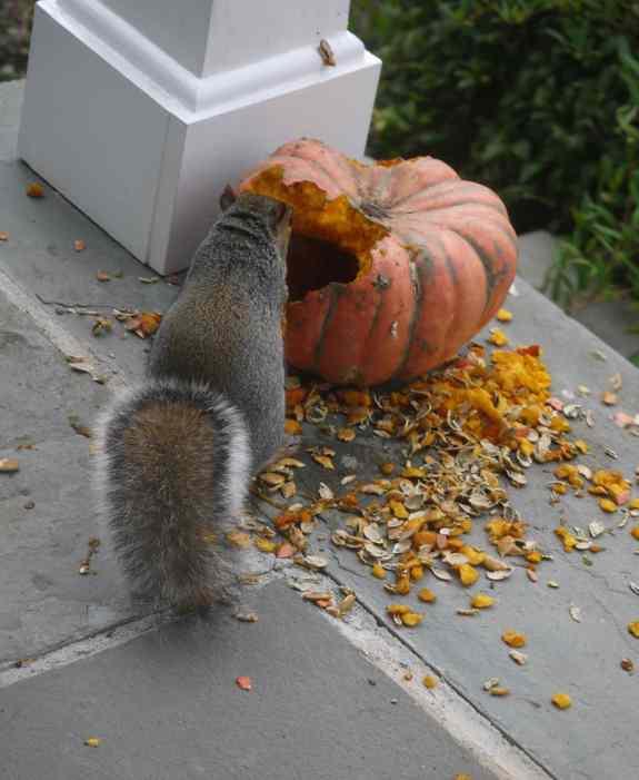SquirrelW