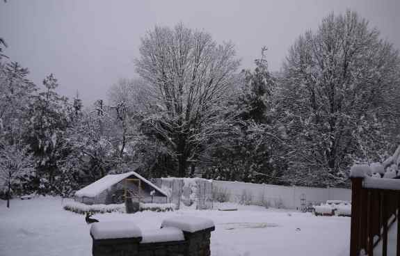 WinterMorn