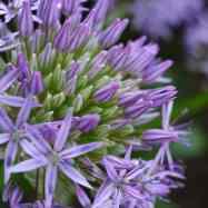 PurpleSide