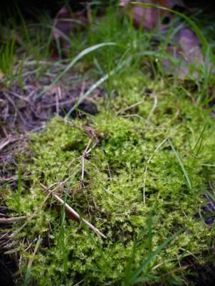 Happy moss