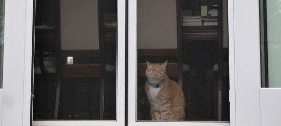 Cat Smells Spring