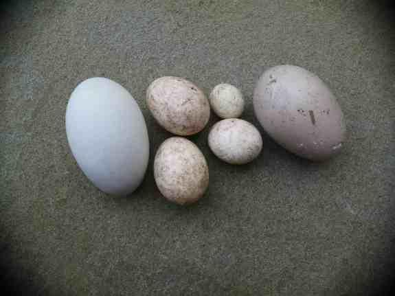 Motley eggs