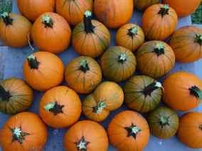 FreePumpkins3