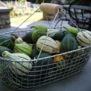 gourds1