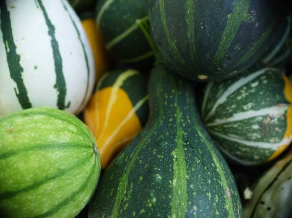 gourds2