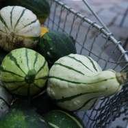 gourds4