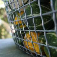 gourds5