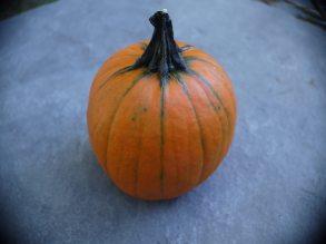 pumpkin-10