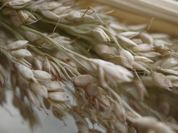 Grains 1